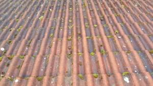 Sammalta katolla